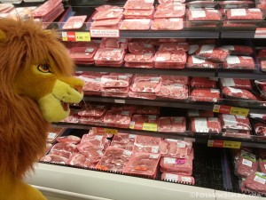 Simba checking out the meat section of Supervalu on Davie Street in Vancouver