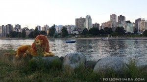 Simba enjoying the afternoon laying on the rocks alongside False Creek in Vancouver, BC